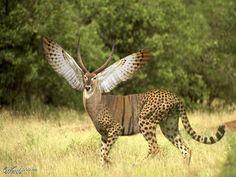 animal hybrid