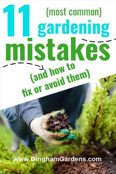 Every gardener makes mistakes - that is how we learn. Stop by Gingham Gardens to learn the most common gardening mistakes and how to remedy them. Is your flower garden lacking? Are your gardens just blah? See if you're making one or more of these gardening mistakes and learn how to avoid making gardening mistakes, or how to fix them. Garden Maintenance, Most Common, Backyard Garden Design, Garden Pests, Compost, Vegetable Garden, Mistakes, Perennials, Gingham