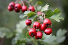 Camping Survival, Health Fitness, Fruit, Nature, Food, Laura Ashley, Gardening, Google, House