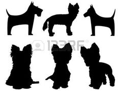 small dog: Small dog silhouettes   Yorkshire Terrier and Schnauzer  Illustration