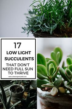succulents actually prefer bright, indirect light as opposed to full sun.But in this article we introduce succulents that thrive in sun-deprived rooms. If you have filled up all your bright, sunny areas indoors you can still grow these low-light succulent Propagating Succulents, Growing Succulents, Planting Succulents, Indoor Succulents, Succulent Plants, Different Types Of Succulents, Types Of Herbs, Low Light Succulents, Plantas Indoor