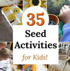 seed activities perfect for kids of all ages, especially preschoolers! Awesome nature learning and science.Fun seed activities perfect for kids of all ages, especially preschoolers! Awesome nature learning and science. Seed Activities For Kids, Nature Activities, Spring Activities, Infant Activities, Science Activities, Educational Activities, Preschool Garden, Preschool Science, Science Fun