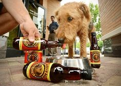beers for doggies? really?