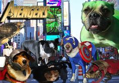 If the Avengers was cast by super cute animals.