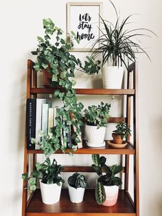 Plant babies on a shelf Along with my 'Let's stay home' print, it's the coziest little corner!