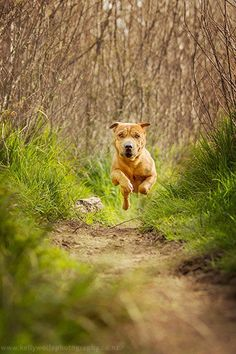 [Photo Tips] 6 Tips for Photographing Dogs in Action