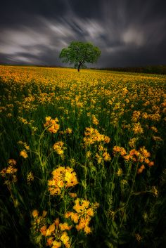 FlowersOnTheField by Wolfgang Moritzer on 500px
