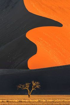 Dune and tree, Namib-Naukluft National Park, Namibia. Photograph take by Ian Plant. #OutdoorPhotographyGuide #travel #photography