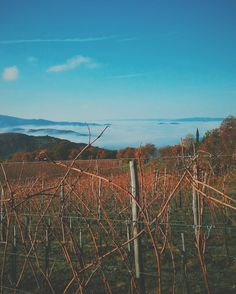 This morning from our piece of Paradise just above the clouds.  #poderedipomaio #thinkgreendrinkred