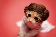 Princess Leia, Star Wars - Tiny Kittens Dressed As Iconic Fantasy Characters Are The Best Tiny Kittens (according to whom?) I love tiny kittens just as they are because they were created cute and don't need any embellishments. Cute Kittens, Cats And Kittens, Baby Kittens, Pet Halloween Costumes, Pet Costumes, Happy Halloween, Baby Animals, Funny Animals, Cute Animals