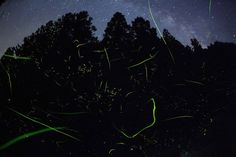Fireflies dance with Milky Way background (10 pictures)