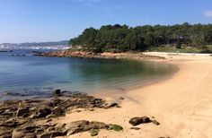 Palmeira. Galicia