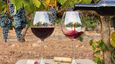 10 Mejores Imágenes De Vino Vino Vinos Copas De Vino