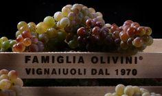 OLIVINI - Novaidea