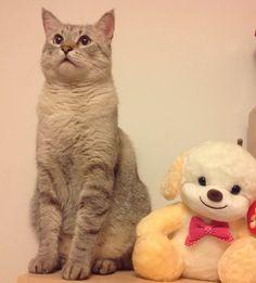 Chili, my cat ❤️
