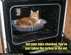 Get your eyes checked. You've just taken the turkey to the Vet.