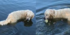A clever dog took to the water with his fishing bait, he uses bread to lure in the fish and in an instant snaps up his dinner from under the water.