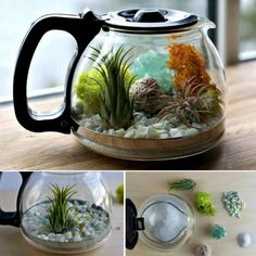 Coffee Pot Planters Coffee and tea pots can be turned into the most adorable terrariums. Put them on a window sill or in your coffee nook.Here's the link to the tutorial >> DIY Coffee Pot Terrarium Learn how to make a terrarium coffee pot quickly and Terrariums Diy, How To Make Terrariums, Succulent Terrarium, Diy Planters, Garden Planters, Planter Pots, Succulent Ideas, Hanging Terrarium, Succulent Cakes