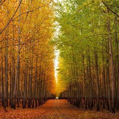 The Boardman Tree Farm in Oregon