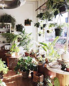Shop the Pistils Nursery Instagram Feed - Pistils Nursery