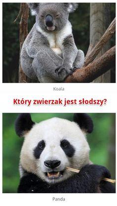 Który zwierzak jest słodszy? Odpowiedz już teraz na www.ubieranki.eu! http://www.ubieranki.eu/quizy/co-wolisz/89/ktory-zwierzak-jest-slodszy_.html