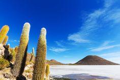 Le Salar de Uyuni est situé à près de 3 700 mètres d'altitude, au sud-ouest de la Bolivie. Il est le vestige d'un ancien lac d'eau de mer, a...