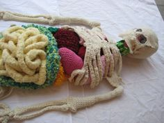 Knitted skeleton with internal organs and other knitted science projects. LOVE!