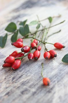 Rosa canina - rosehips are so versatile, brilliant for skin and full of vitamin C! Lovely when picked fresh, popped in a cup of boiling water for an energising drink :)