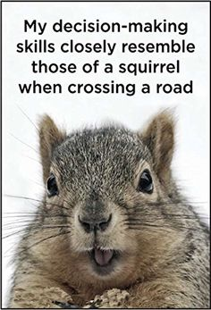 My decision-making skills closely resemble those of a squirrel when crossing a road refrigerator magnet Funny Animal Quotes, Animal Jokes, Funny Animal Pictures, Cute Funny Animals, Cute Baby Animals, Funny Cute, Hilarious, Wild Animals, Cute Squirrel