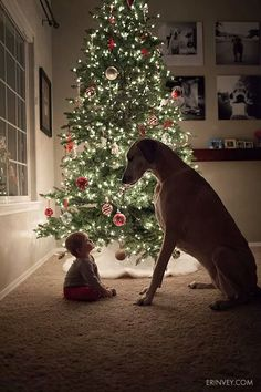 Christmas Cards Ideas for Your Pets Guarantee cuteness overload with a shot of your baby + the pup.Guarantee cuteness overload with a shot of your baby + the pup. Cute Puppies, Cute Dogs, Cute Babies, Big Dogs, I Love Dogs, Giant Dogs, Kids With Dogs, Christmas Photos, Christmas Time