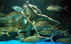 Αποτέλεσμα εικόνας για υποβρύχιο μπαλέτο