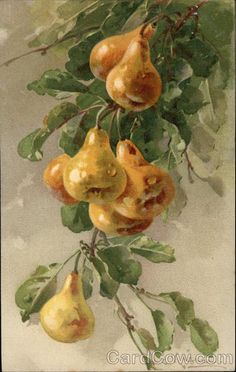 Golden Pears on a Branch Fruit Pear Drawing, Catherine Klein, Fruit Plants, Flower Branch, Vintage Postcards, Planting Flowers, Decoupage, Drawings, Creative