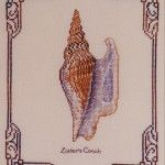Lister's Conch