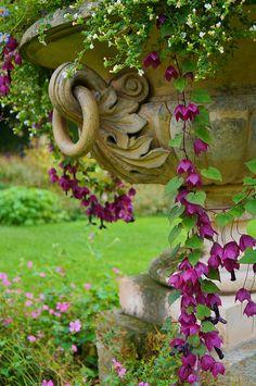 flower containers, modern gardens, garden urn, potted plants, flowering vines, purple flowers, bleeding hearts, flower pots, flowers garden