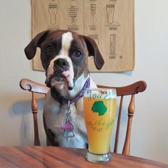 National Adopt a Shelter Pet Day : Adoption Stories - These are our favorite craft beer dogs to follow on Instagram!