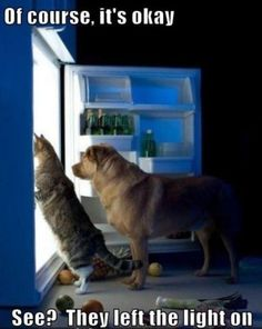 Funny Cats Related posts:Cute funny cats and kittens. Funny laws about catsCute, funny cats. Did you know that cats.Сute funny cats, Unusual facts about cats: emotions, smelling Animals And Pets, Funny Animals, Cute Animals, Fauna, Funny Animal Pictures, Dog Care, Crazy Cats, Big Cats, I Love Dogs