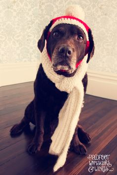 www.padfootwhiskersandwings.com  dog christmas photo collection