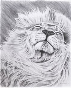 Lion Pencil Drawing Artwork 8 x 10 inch Giclee Print by roxy5235