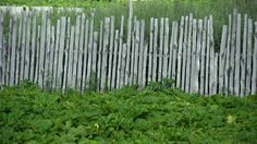 Image result for rustic wooden picket fence