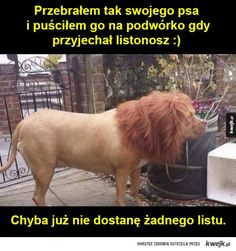 przypał Donia, Everything And Nothing, Keep Smiling, Pusheen, Good Mood, Best Memes, Funny Dogs, Dog Cat, Geek Stuff