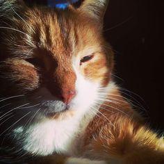 Setting sun resting cat. #cats #catsofinstagram #nap