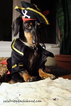 Treasure map! http://www.celebritydachshund.com/2014/04/02/packing-for-sailing-trip-with-dachshund/