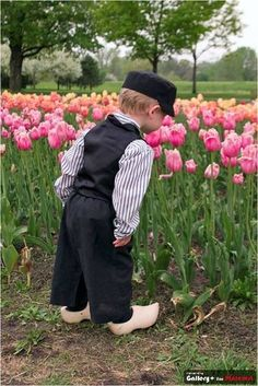 Netherlands (Holland) little boy wearing  wooden shoes and inspecting the tulips.