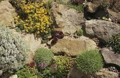 Follow the photo link to discover the benefits of, and instructions for, planting succulent gardens.