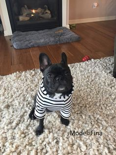 Black And Natural Striped Dog Hoodie Liverpool Textured Knit