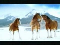 Budweiser Clydesdale commercial - Snowball
