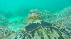 The ecosystem may be in dire straits, but conservationists hope a new video shot by a GoPro-toting sea turtle will raise appreciation for what's at stake.