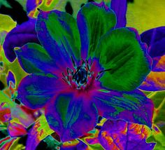 Insanely Colorful Abstract Flower Blossom Fine Art Print