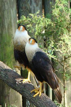 Homosassa Nature Park