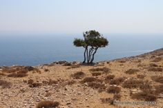 Hiking around the island of Pserimos in Greece. Many surprising little treasures to uncover in this mostly bare and barren island. Kos, Islands, Greece, Hiking, Beach, Water, Outdoor, Greece Country, Walks